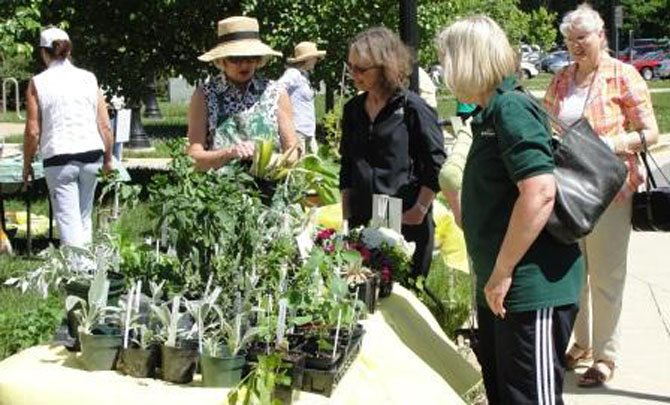 Shoppers can choose from a wide range of plants and shrubs at reasonable prices offered at the Great Falls Garden Club annual plant sale.