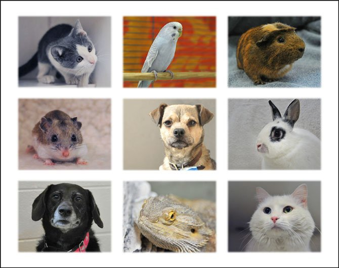 A collage of some of the animals who were or still are at the Fairfax County Animal Shelter.
