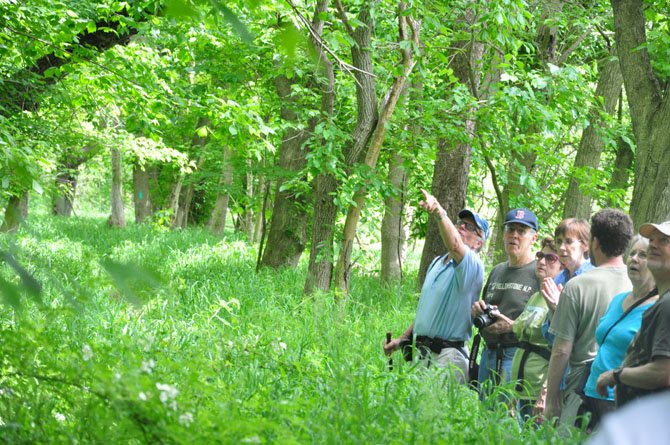 Bob Vickers points out one of the largest scarlet oak trees in the state during the annual Great Falls Big Tree Hike Saturday, May 12.