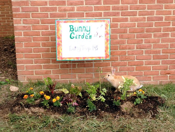 Woodley Hills Elementary School incorporated a rabbit named Crackers into its curriculum this year. The rabbit is used to reinforce the school's values including hard working, trustworthiness, responsibility and caring.  Susan Carlson is the Woodley Hills teacher responsible for Crackers.  The children learned about voting as they participated in a contest to choose Crackers' name, each child writing an essay supporting their proposed name. The children learned about rabbits and are allowed to feed him with supervision. The school's Daisy Troop earned a badge by planting a garden filled with foods appropriate for Crackers.