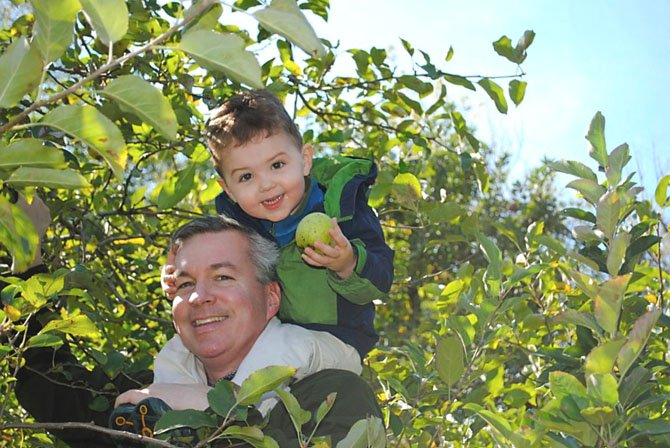 Daddy is helping Alex pick an apple off the tree.