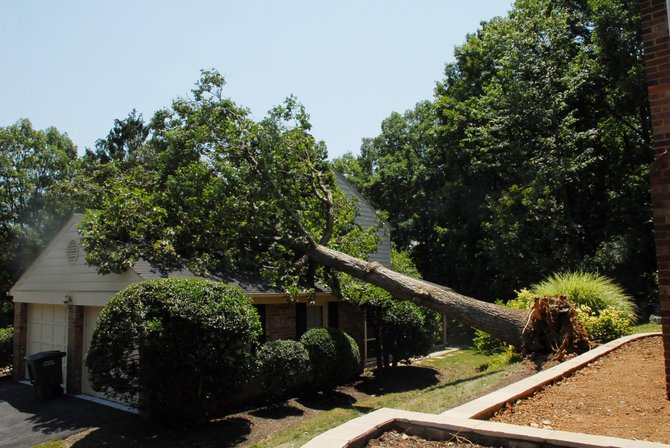 A mature white oak fell across a property line and came to rest on a neighboring house. Homeowners Grant and Aquinas Beuhrig said they were surprised by the severity of the storm.