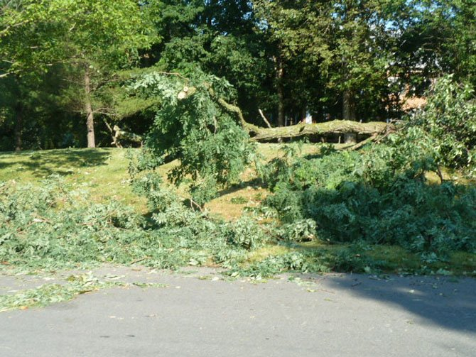 Trees down along Bradley Boulevard
