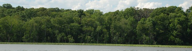 The freshwater marsh in the Potomac River in Mount Vernon, near the mouth of Little Hunting Creek.