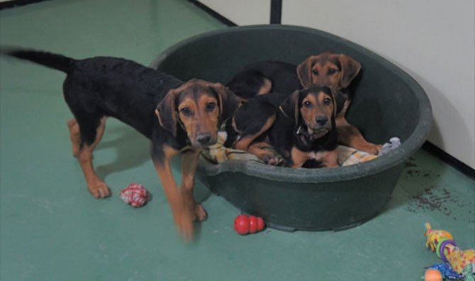 "The ""J"" sisters, Jillian, Julie and June are 3-month-old puppy bundles of joy and they know how cute they are. All the volunteers enjoy playing with them but hope they find their real homes soon."