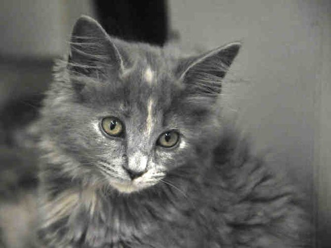 Meet Franny at the Fairfax County Animal Shelter.