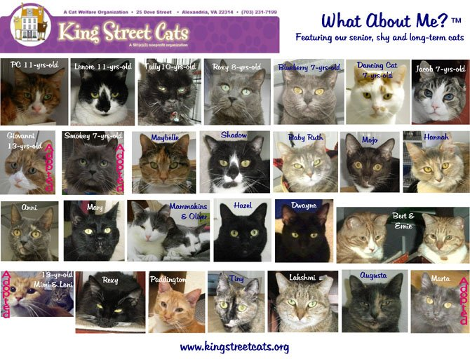 A poster of the What About Me depicts cats available for adoption at King Street Cats. The What About Me campaign features mature cats that can not compete with the young and adorable. This year organizers hope to find 30 cats new and loving homes.