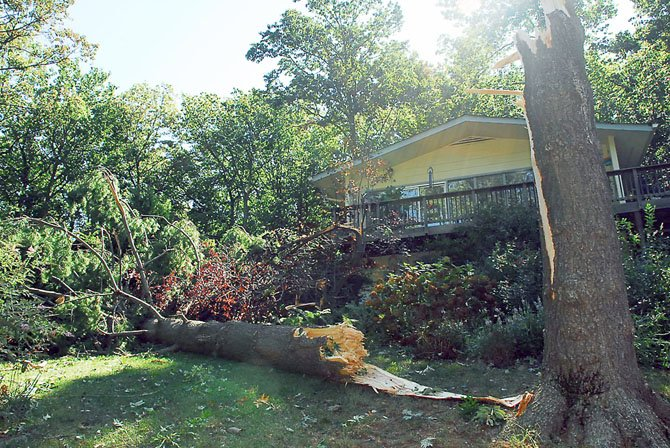 This pine tree in front of a home on South Shore Drive did not survive the brief yet powerful storm. The National Weather Service reports that the storm did not qualify as a tornado.