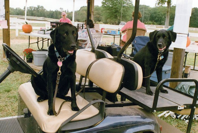 Whos driving? Darby and Toby were all set to go for a ride. Whats a horse event without dogs?