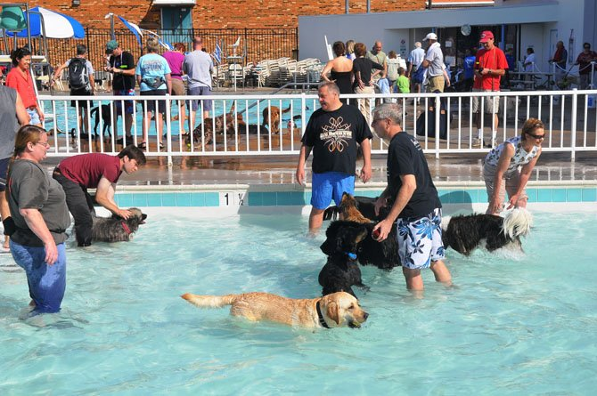 The baby pool provided a lot of romping for the water dogs on Saturday afternoon.