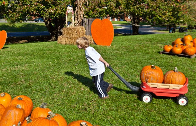 Oliver Bush, 7, pulls a wagon full of pumpkins at last year's pumpkin sale at St. Thomas Episcopal Church. This year's will begin Oct. 6.