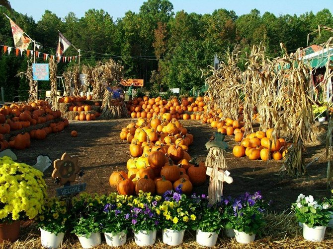Burke Nursery & Garden Center's 18th Annual Fall Festival