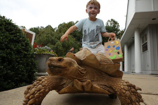 Four-year-old Henry Carlson of Reston follows Bantu, an African Spurred Tortoise, at the St. Francis Country Fair. The fair included a petting zoo hosted by the Bar C Ranch of Berryville. Other fair activities included games, hayrides, music, and a regional quilt show.