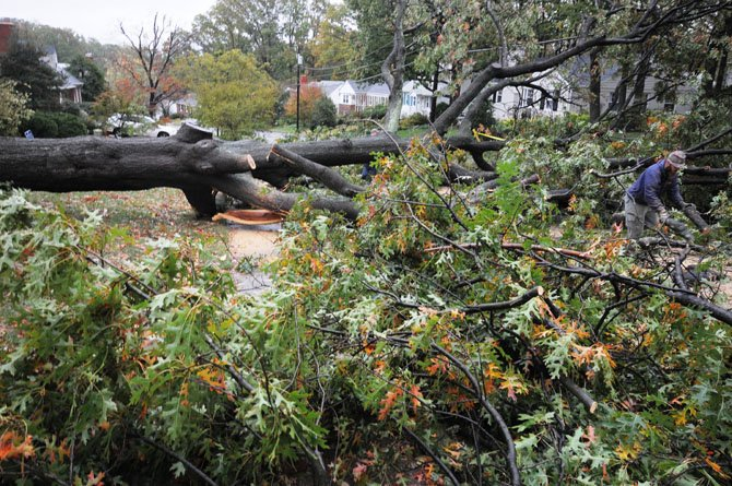 Fallen tree blocks Crestwood Drive east of Cameron Mills Road.
