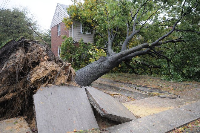A sidewalk on Cameron Mills Road shifts after a tree uprooted in the wake of Hurricane Sandy.