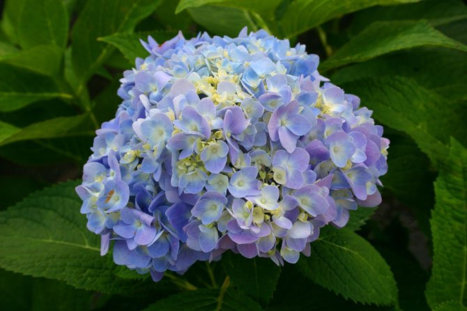 Experts say some flowering plants like dormant hydrangeas can be planted now and bloom in spring.
