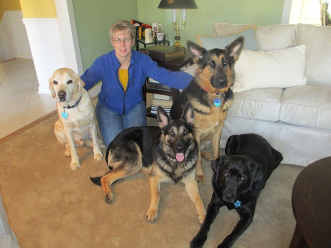 Veterans Moving Forward Inc. puppy-training Coordinator Michele Khol with four of her Guiding Eyes for the Blind fostered dogs.