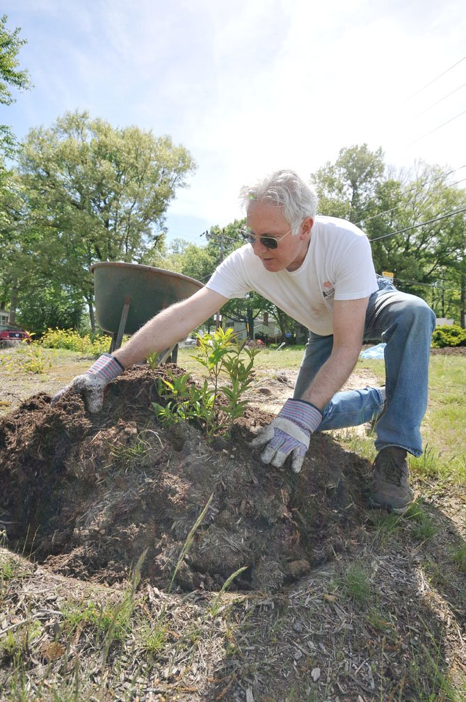 Past president of the Riverside Estates Civic Association Mark Miller breaks up and spreads mulch over a recently planted border shrub.
