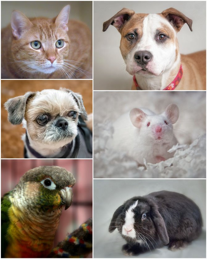 Pictured are some of the many residents of the Fairfax County Animal Shelter.