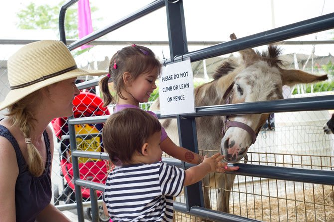Emma and Jack Carey with mom Tara Carey, of Centreville, meet one of the donkeys at the petting zoo at the three-day 2013 Celebrate Fairfax Festival on June 9.