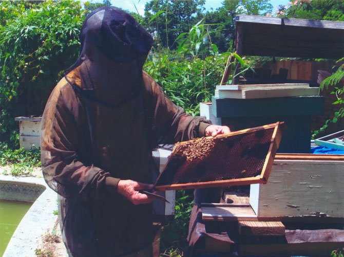 Paul Diehl, in full costume, tends a backyard colony.