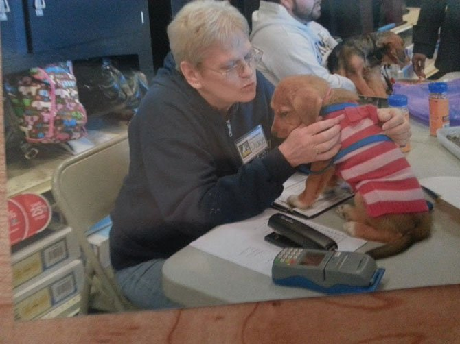 Diane McIntosh, a volunteer with the Lost Dog and Cat Rescue Foundation, sometimes holds on to puppies too young to play with the other dogs during adoption events.