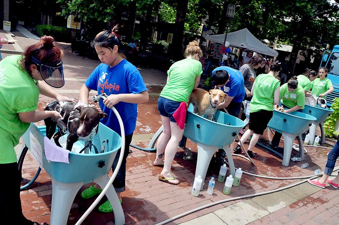 Volunteers and staff from Dogtopia wash dogs to raise money for service dog groups at Lake Anne Sunday, July 21