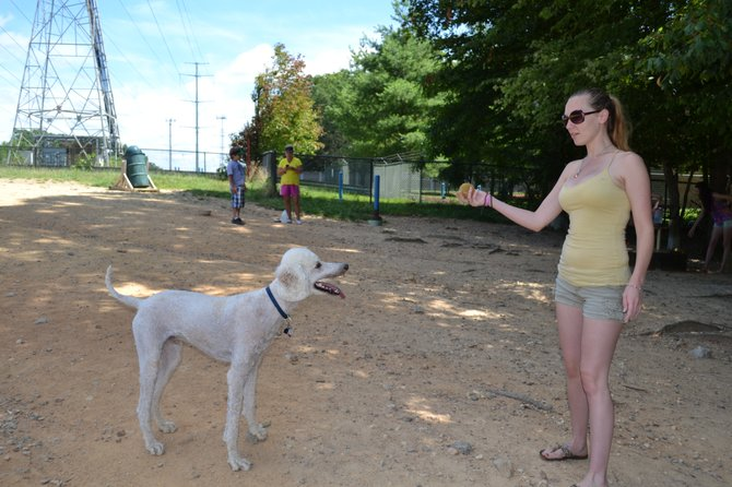 Katie Elie of Lorton gets ready to launch a tennis ball for Thor to retrieve at the South Run Dog Park.
