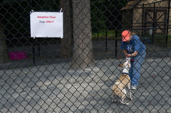 A Fairfax County Animal Shelter volunteer plays with a dog in a play yard designated for dogs that have not been exposed to the upper respiratory infection that has forced the shelter to temporary halt the intake of dogs on July 27.