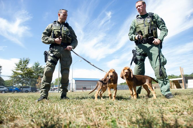 Officer Pete Masood (left) and Kevin Clarke show off the newest members of the Fairfax County Police K9 unit, Bolt (left) and Sy, 14-week-old bloodhounds that the two handlers will train to be tracking dogs for the unit.
