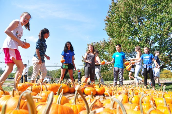 Volunteers sort pumpkins for the annual pumpkin patch at St. Thomas Episcopal Church Saturday, Oct. 5.