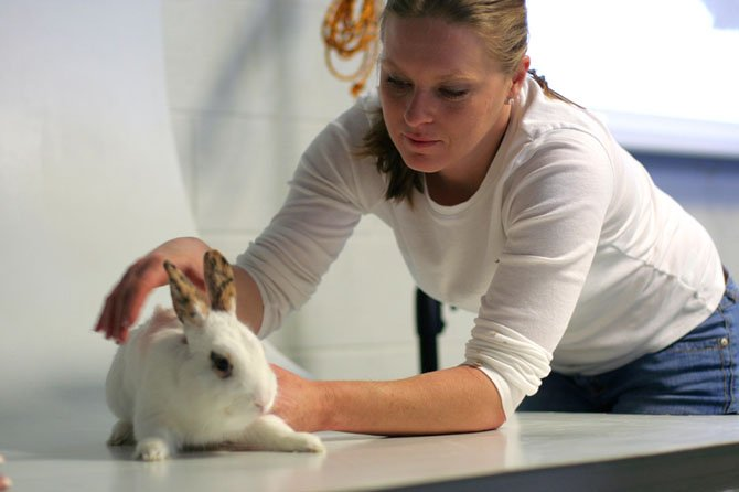 "Rani Hart, a volunteer at the Fairfax County Animal Shelter, ""wrangles"" a rabbit during a photo workshop on Feb. 23."