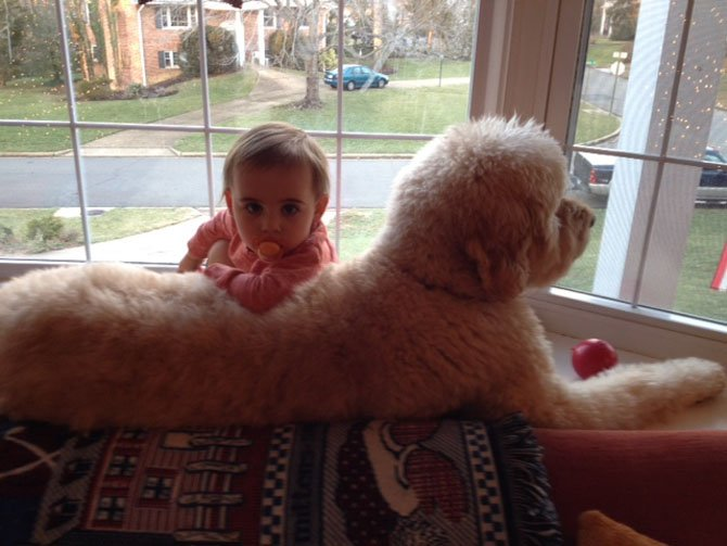 Our dog Huck (7 years old) and our daughter Leah (1 and a half years old) love to hang out together in our bay window keeping a watchful eye on all the neighborhood activities. It's an exciting day when another dog walks by or even better a cat or a fox! They both love each other very much. — Danielle Albers