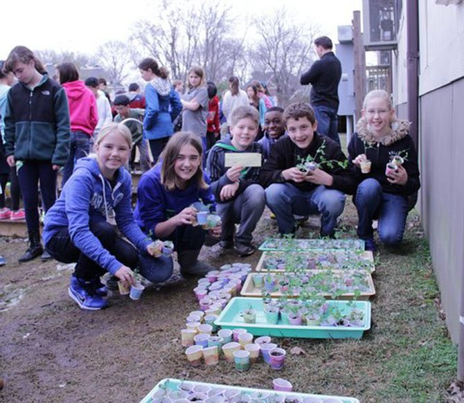 Churchill Road fifth graders Suzanne Leaptrot, Bailey Wyckoff, Benjamin Higbee, Dike Illoh, Nate Fimbres and Eleanor Richard prepare to transplant seedlings to the cold frames.
