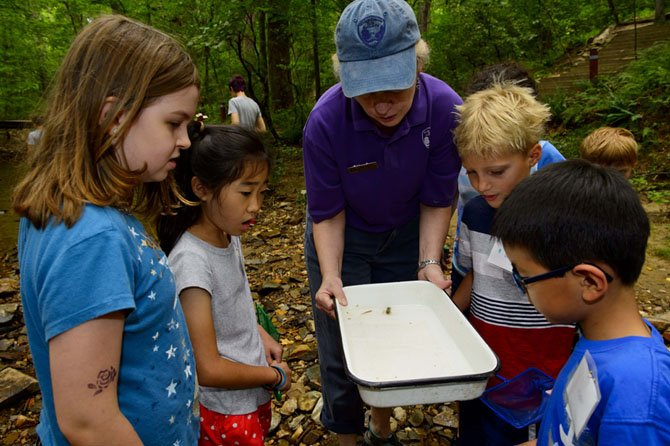 Campers at Hidden Oaks Nature Center marvel at a crayfish they netted in the creek.