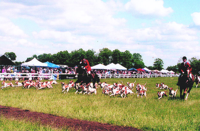 Potomac Hunt hounds and hunt staff gave a magnificent performance before an estimated six to seven thousand person crowd at the May 18, Potomac Hunt races.