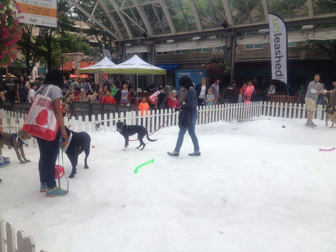 Dogs and owners were able to frolic and play on a patch of snow at Reston Town Center for free thanks to a special snow day event sponsored by Unleashed by Petco in August.