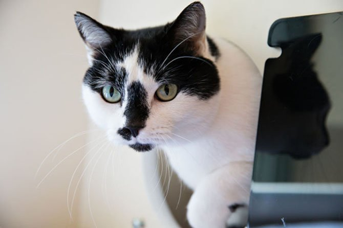 Betty is a four-year-old domestic shorthair.
