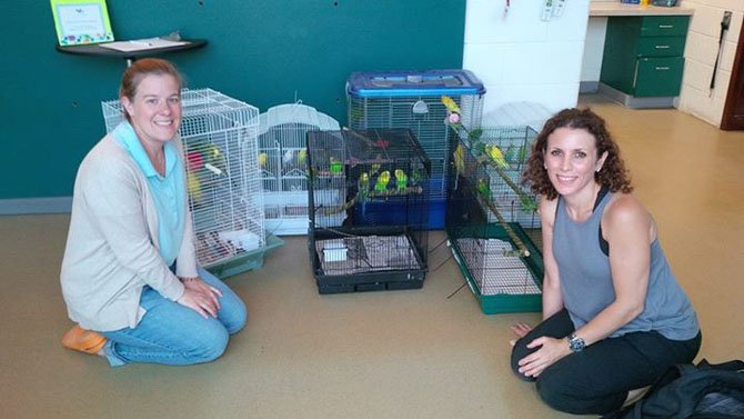 The Animal Welfare League of Alexandria's Director of Animal Care Abbie Hubbard (left) and veterinarian Kim Danoff of Marden's Ark Refuge in North Carolina, with birds captured from a house in Del Ray.