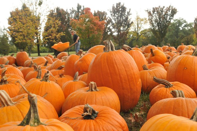 The pumpkins are grown on the Navajo Indian Reservation in New Mexico, and they are distributed and consigned to Immanuel Church-on-the-Hill and over 1,300 other churches of various denominations throughout the nation. These partnerships support over 300 jobs on the reservation, as well the programs of participating churches.