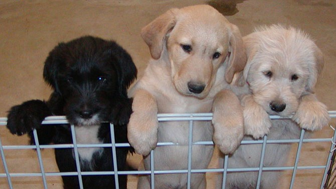 Among the animals that have been adopted is Buddy, in the middle.