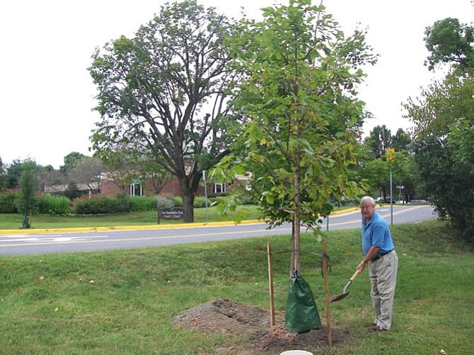 Jack Clark puts the finishing touches on planting a White Oak in front of the Great Falls Library last year.
