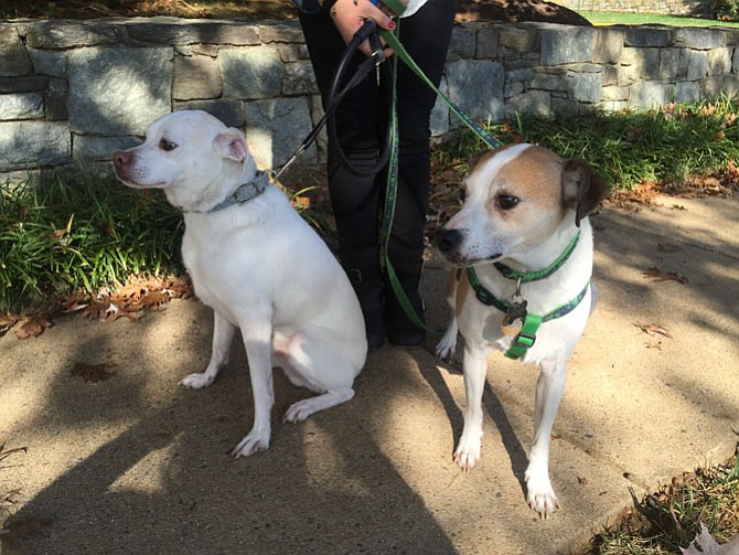 On the right is dog Mickey, formerly known as Sherlock, reunited last October with his birth brother, Watson, who is all white.