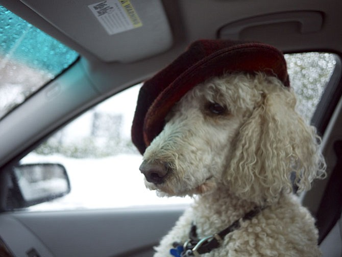 Kai, riding shotgun, last winter.
