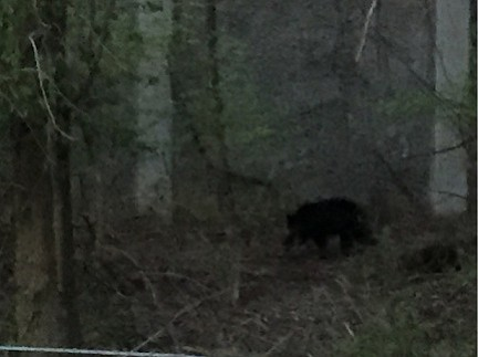 Residents have reported multiple bear sightings in Vienna/Oakton.
