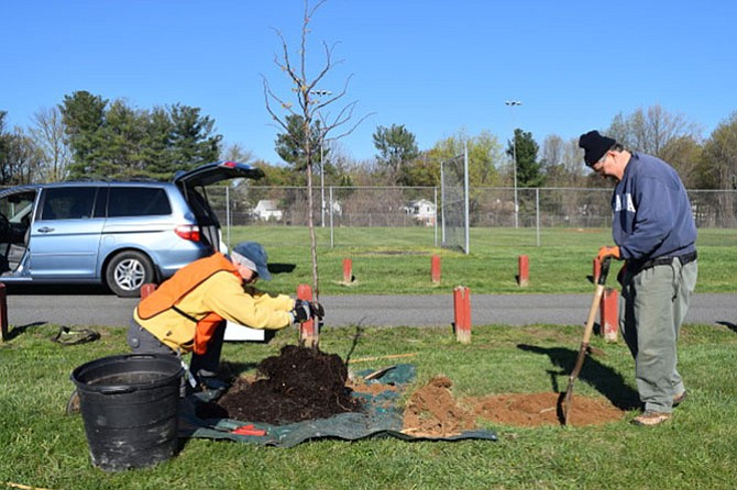 McLean Tree Foundation (MTF) volunteers, from left, Bruce Lipton and Ray Lewyckyj prepare a planting hole for a Redbud tree in Lewinsville Park, McLean, in celebration of Arbor Day.