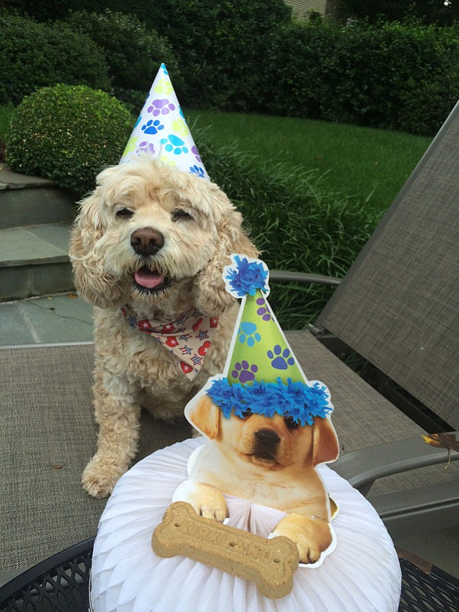 Maddie, the treasured pet of Sharon Lewis, Vienna, celebrated her 11th birthday in great style in July, 2016.