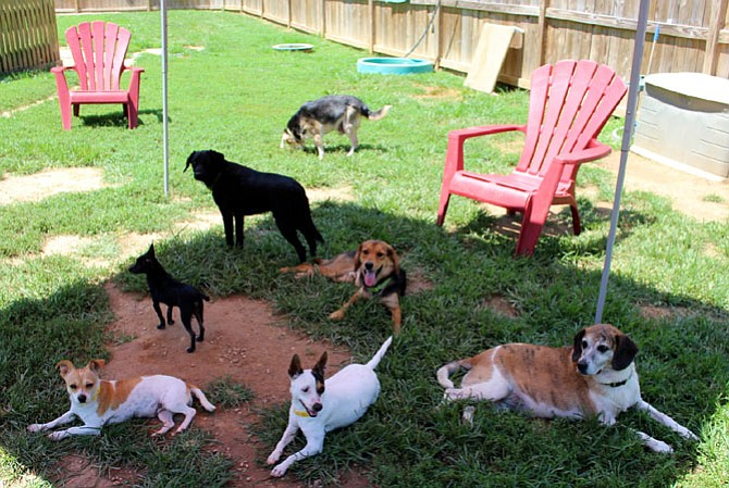 Homeward Trails dogs enjoying the shaded pavilion on a hot day while waiting for their forever homes.