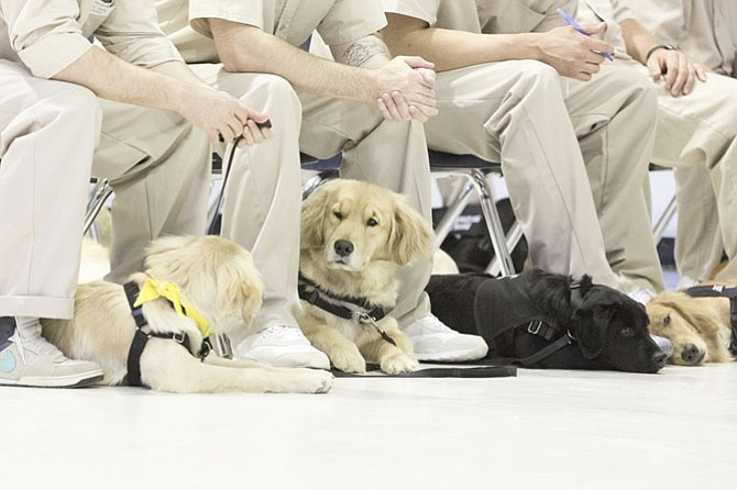 Service dogs in training and inmate trainers sit together at St Marys Correctional Center in West Virginia.