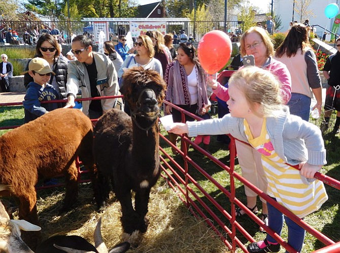 Addison Considine feeds a llama at last year's petting zoo.